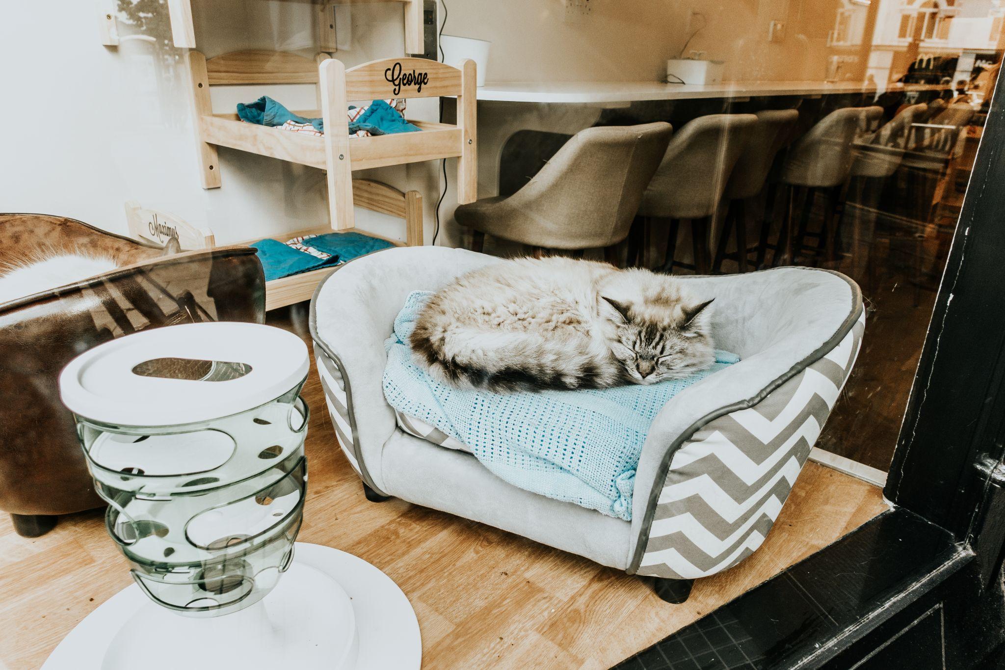 cat cafe- SOPHIE EGGLETON (1 of 1)